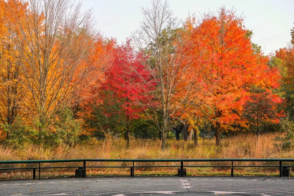 Trees with orange and red leaves