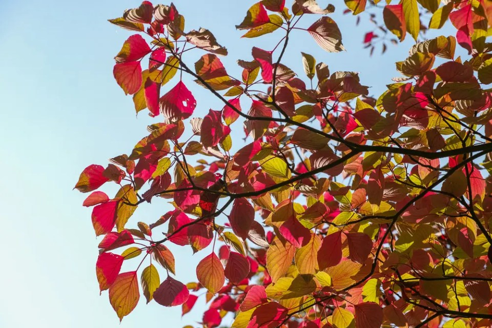 Green and pink leaves