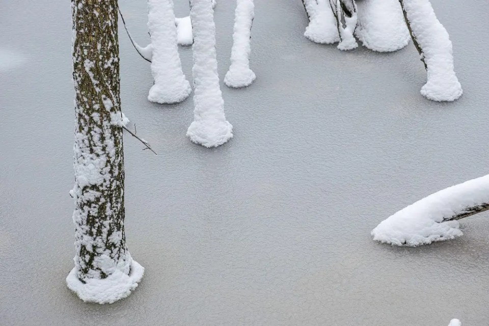 Trunks in frozen lake