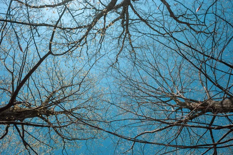 Intertwined tree branches