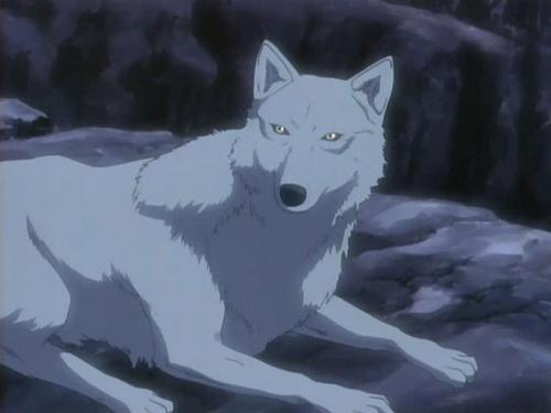 kiba-wolfs-rain-4180893-500-375