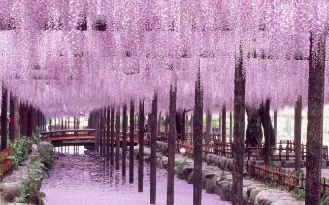 Tennogawa Park, Tsushima, Aichi, Japan