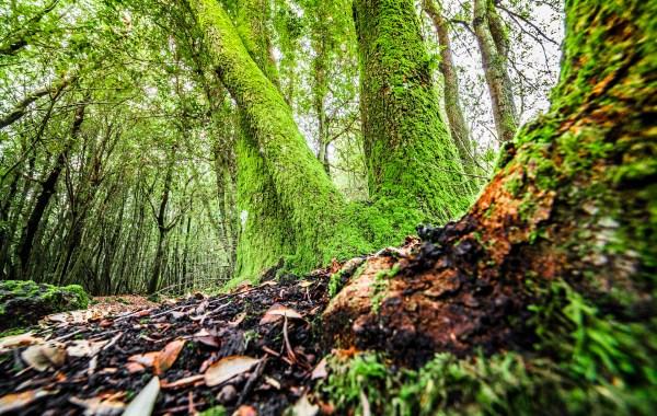 Etna bosco di Leccio