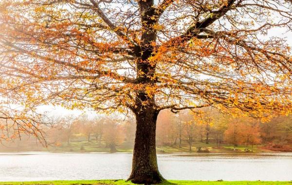 Nebrodi, i colori dell'autunno al lago Maulazzo