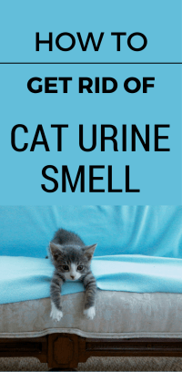 Best To Get Cat Urine Out Of Carpet