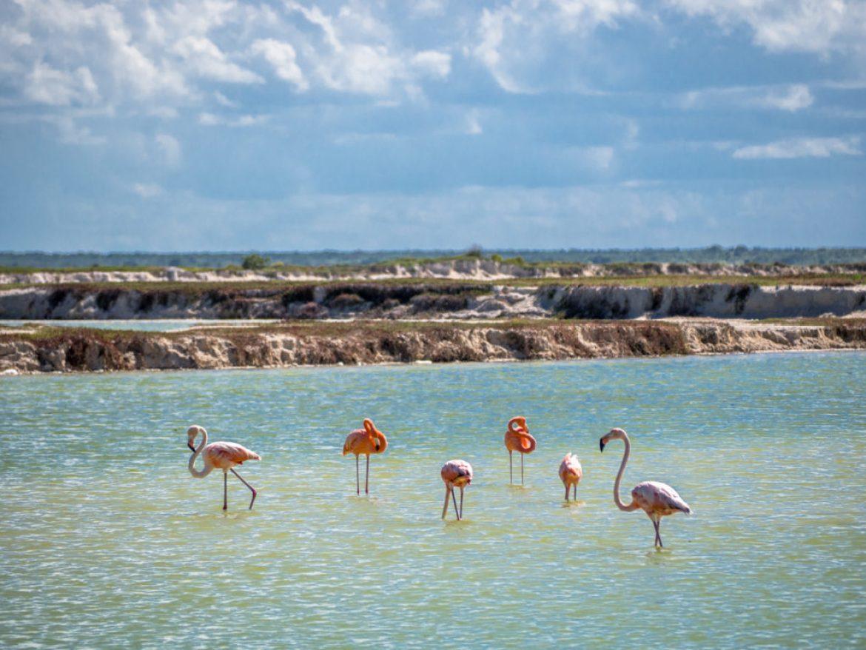 flamingi w Meksyku