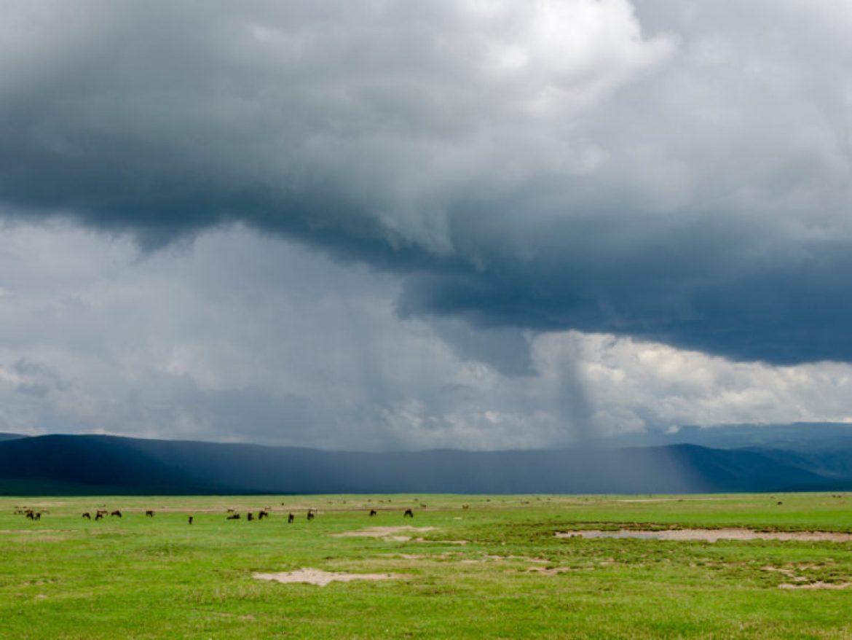 safari w Tanzanii