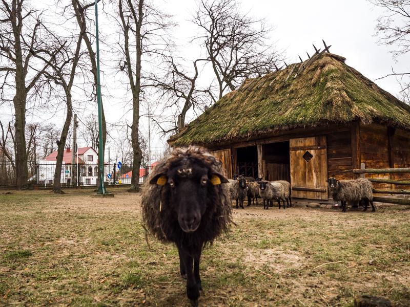 Muzeum Rolnictwa w Ciechanowcu