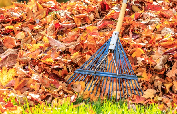 Most Effective Way Rake Leaves