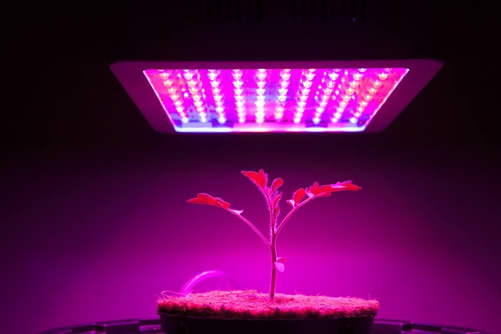 Morsen Led Grow Light