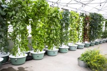Hydroponic Tower Vertical System 2019