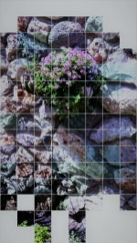 cropped-flwrs100517-FILEminimizer.jpg