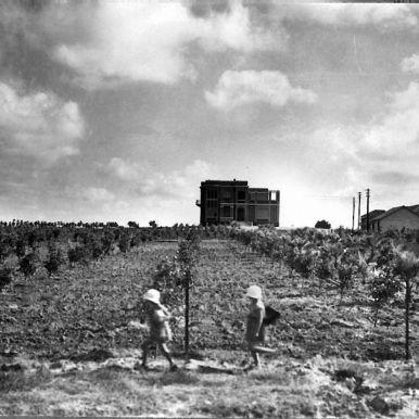 A_young_orchard_on_Moshav_Bnei_Brak._1928_(id.15608574)