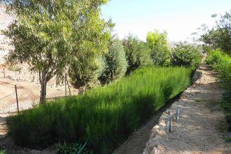 Oasis_of_Ein_Samia_-_panoramio
