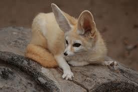 Sand Fox 5