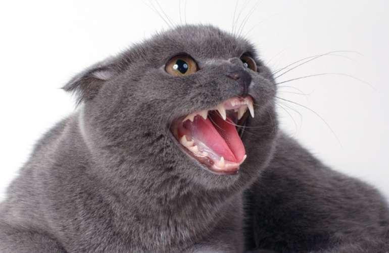 Какие зубы у кошки. Строение зубов у кошек