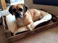 Cute Pallet Dog Bed   101 Pallets