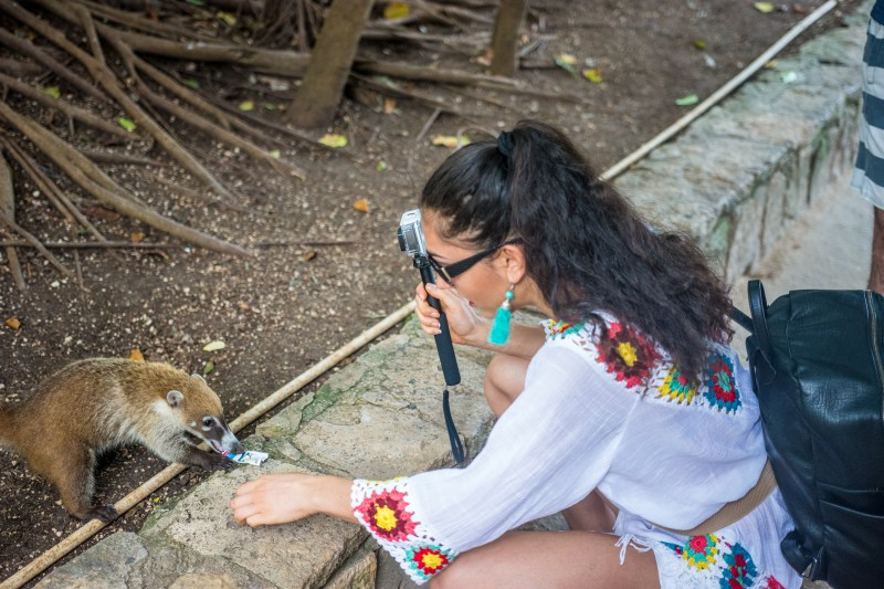 Среща с дългоноса мечка, Тулум, Мексико