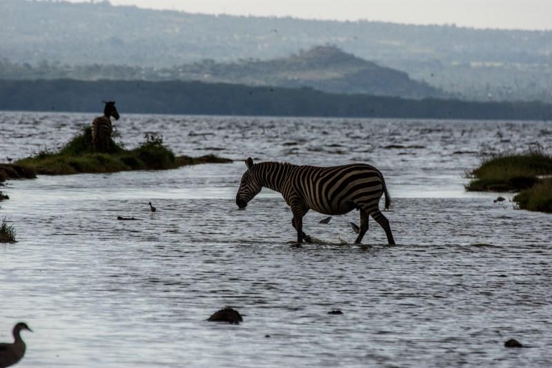 """Национален парк """"Езерото Накуру"""", Кения"""
