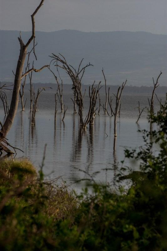 Езерото Накуру, Кения
