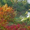 Tour the Quarryhill Botanical Garden in Glen Ellen