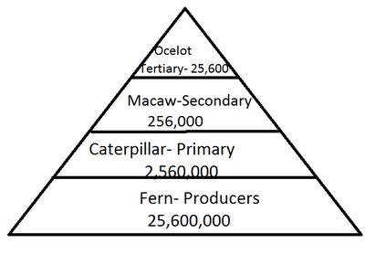 Pyramid & Food webs