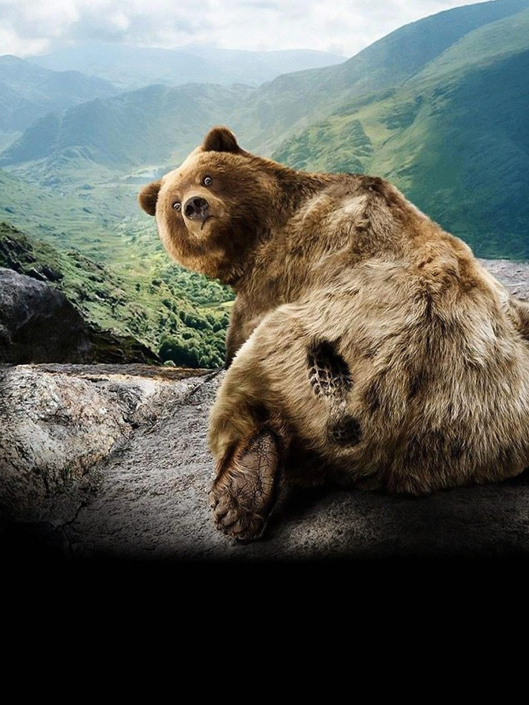 Cute Smiley Wallpapers Fun Humor Cute Grizzly Bear Footprint Ipad Iphone Hd