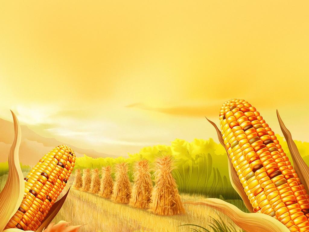Cute Kitten Christmas Wallpaper Holidays Thanksgiving Corn Farm Ipad Iphone Hd