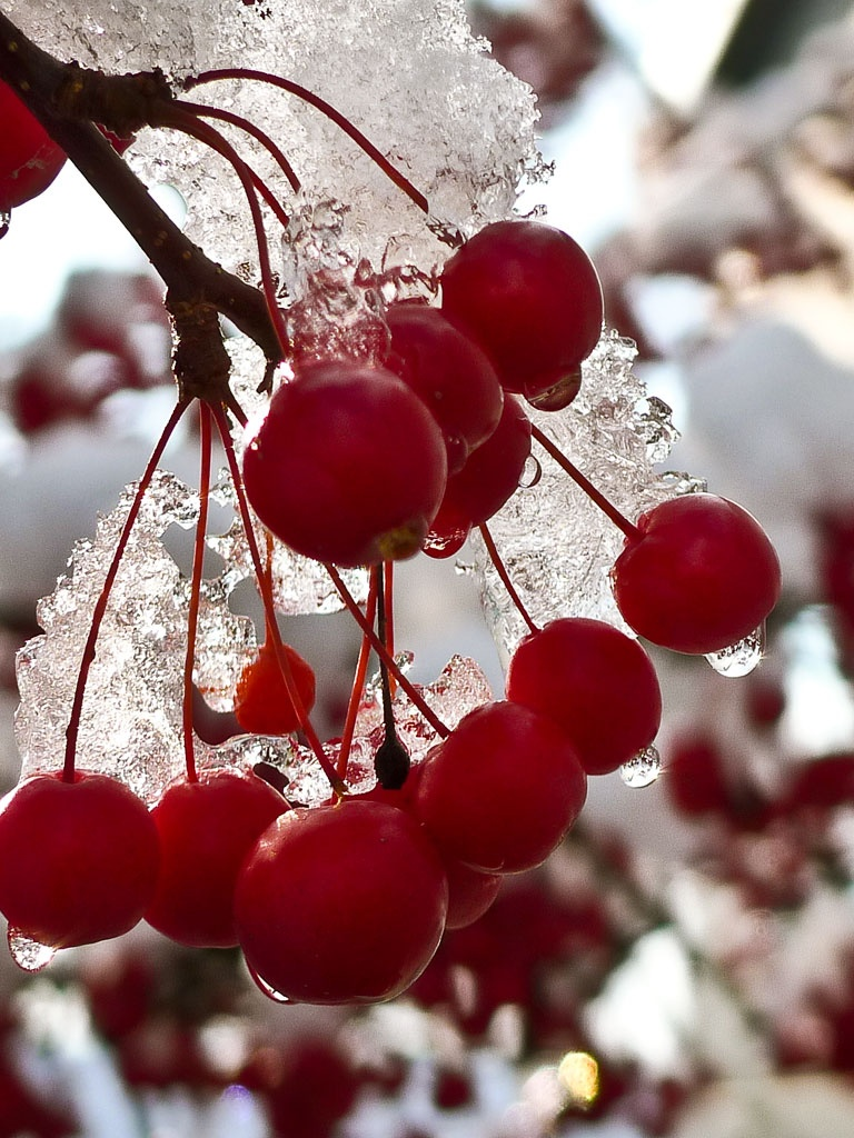 Cute Initial Wallpaper Miscellaneous Winter Red Berries Ipad Iphone Hd