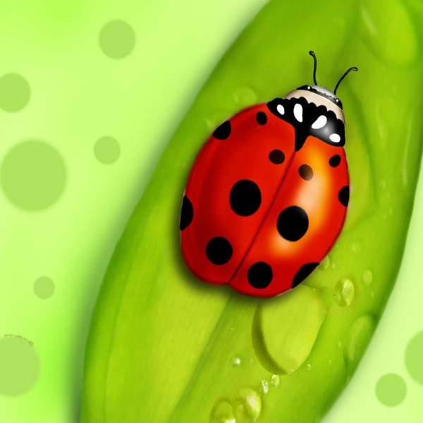 vector - ladybug leaf clipart
