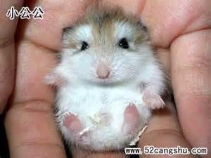 老鼠的習慣 - ABBY的小屋