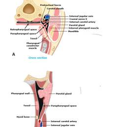 lateral pharyngeal space and its contents a cross section b sagittal view  [ 829 x 982 Pixel ]