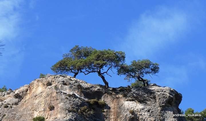 Ορειβατικός Σύλλογος πεζοπορία Πύργος - Μεσελέροι - Πύργος
