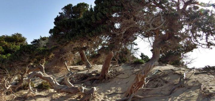 Κρουαζιέρα και πεζοπορία στο νησάκι Χρυσή