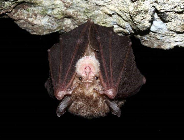Ελληνικά Σπήλαια και Νυχτερίδες, ένα έργο προς τη σωστή διαχείριση
