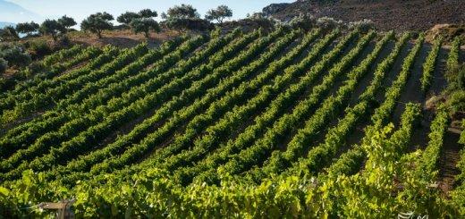 Wines of Crete, ανάδειξη νέου Διοικητικού Συμβουλίου