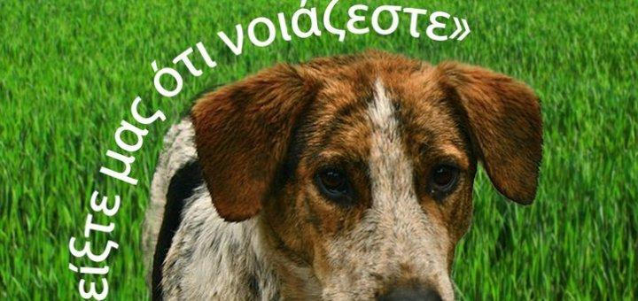 τριήμερο ιατρικών εξετάσεων στα μη δεσποζόμενα ζώα στο Δήμο Χερσονήσου