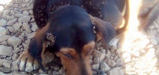 Όταν τα ζώα υποφέρουν εξ αιτίας μας …