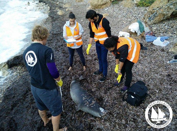 μέλη του Αρχιπελάγους εξετάζουν τη φώκια