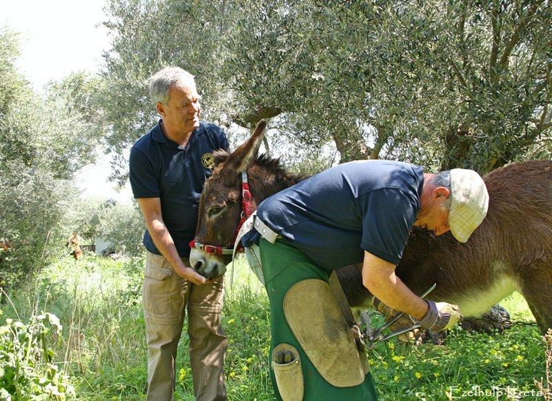 φροντίδα ιπποειδών, φθινοπωρινή εξόρμηση