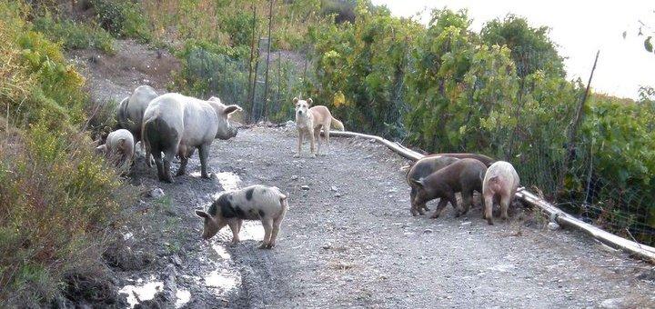 Αγροτική ασφάλεια (άλλη μια) σύσκεψη στην Ιεράπετρα