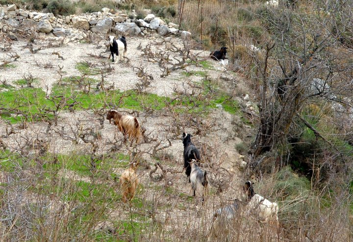 άδεια διατήρησης κτηνοτροφικών εγκαταστάσεων, διευκρινίσεις