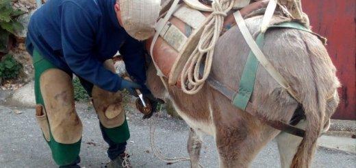 φροντίδα ιπποειδών, ανοιξιάτικο πρόγραμμα από τη Φιλοζωική Κρήτης