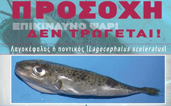 Lagocephalus sceleratus