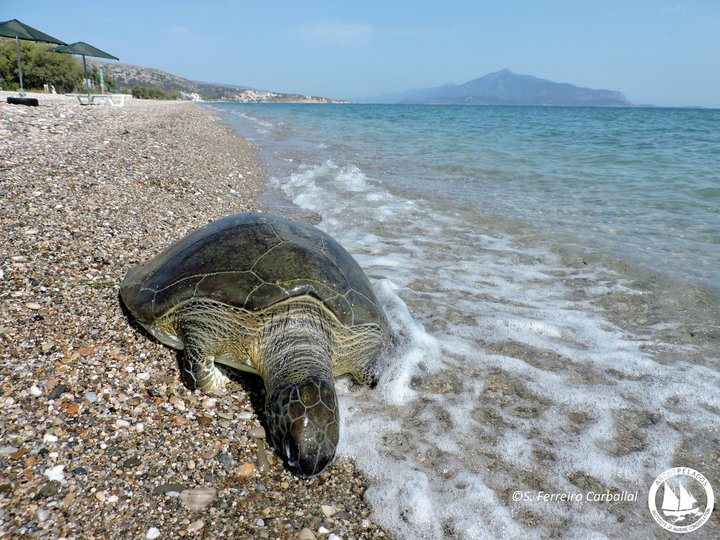 Θανατώσεις σπάνιων ειδών στις θάλασσές μας