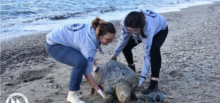 Σπάνια είδη νεκρά στις ακτές του Αιγαίου