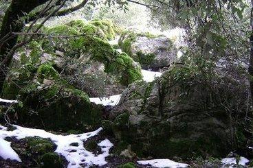 Αζιλακόδασος