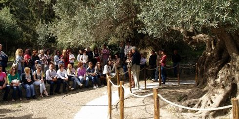 πρωινή ξενάγηση στην αρχαία ελιά στον Αζοριά