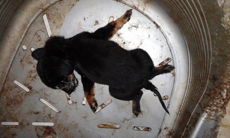 ανυπεράσπιστα ζώα, ψήφισμα του Δημοτικού Συμβουλίου Καρπάθου