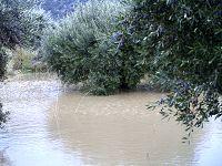 Τα λιόδεντρα μέσα στο νερό